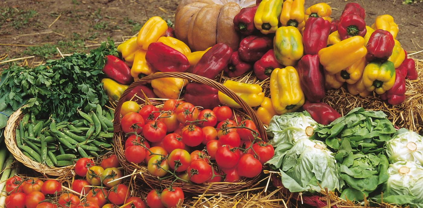 Blog_July 5_Vegetables-garden copy.jpg