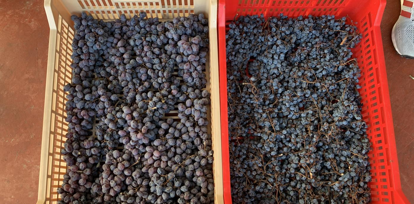 grapes drying amaraone.jpg
