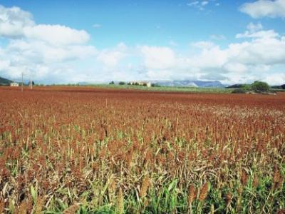 Blog Dec.15 SUstCGField Of Grains Copy.jpg