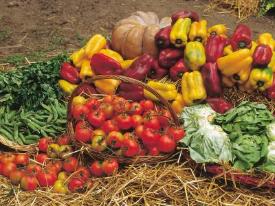 Blog_July 5_Vegetables-garden copy.jpg