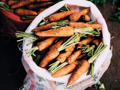 Carrots farm.jpg