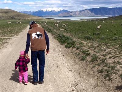 Shepherd Commitment