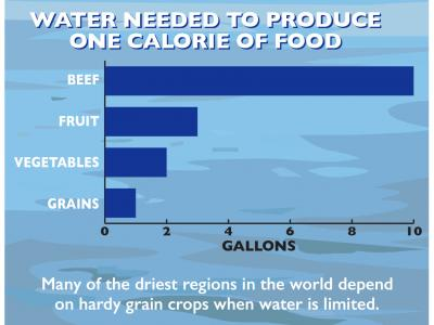 WG_SustainableFood_infographic-2.jpg