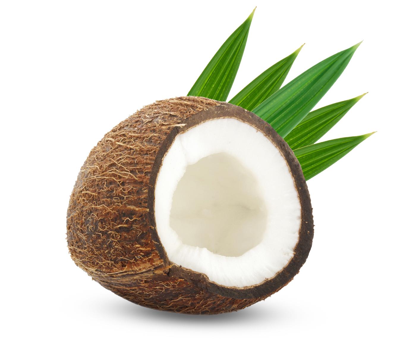7-1_Coconut.jpg