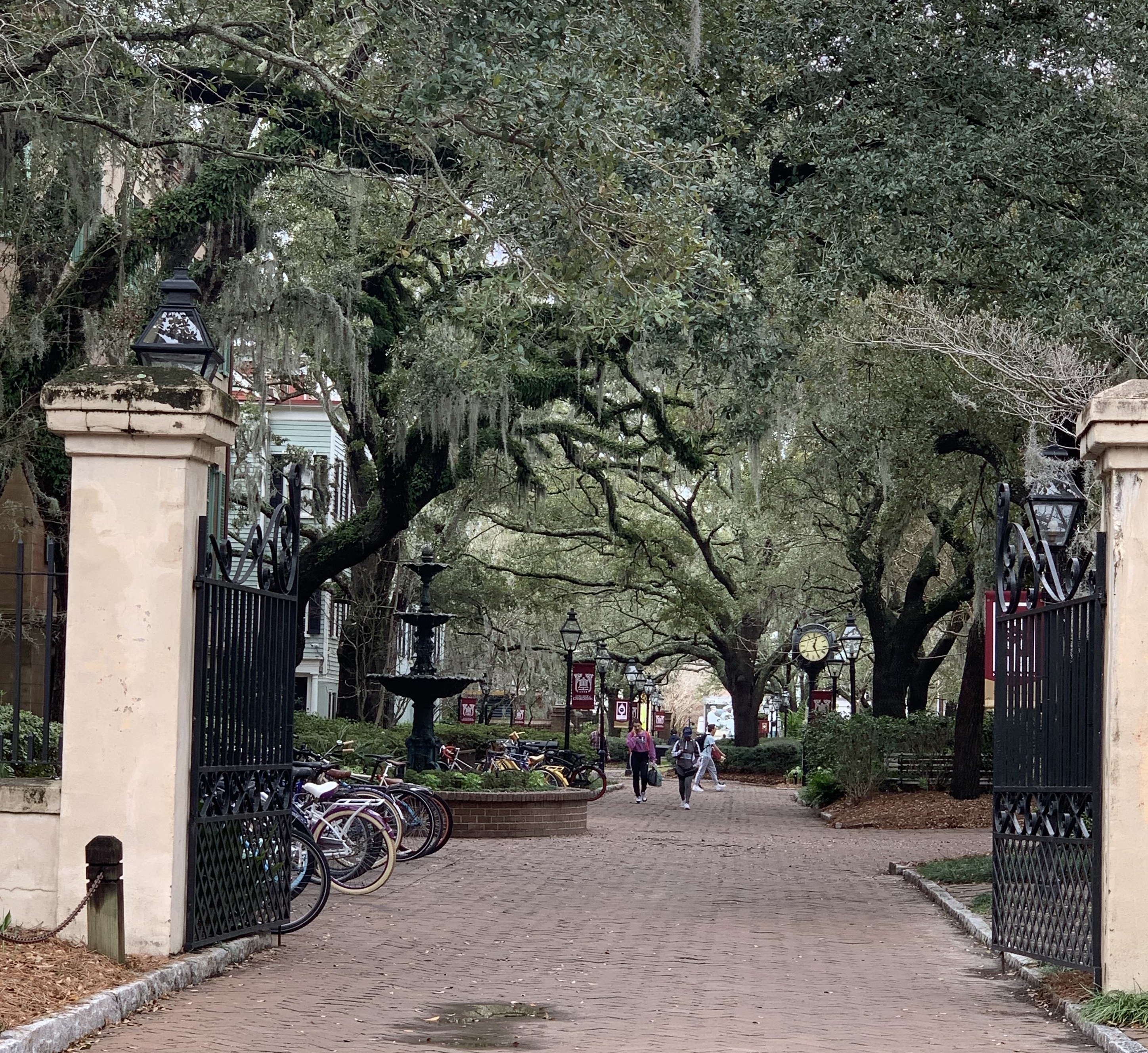 A Charleston street with tree branches and fountains