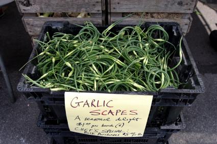 GarlicScapesFORWEB.jpg