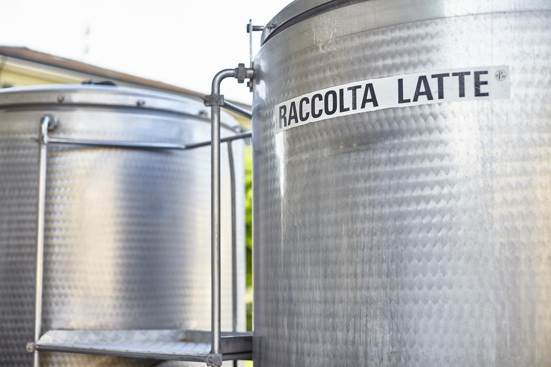 Parmigiano_Reggiano_vats 2.jpg