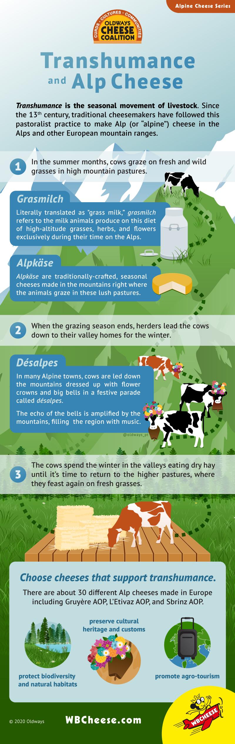 Transhumance Alpine Cheese Infographic