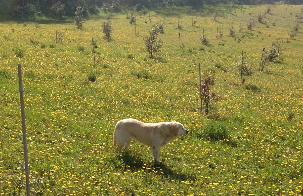 Green field in Umbria, Italy with a puppy