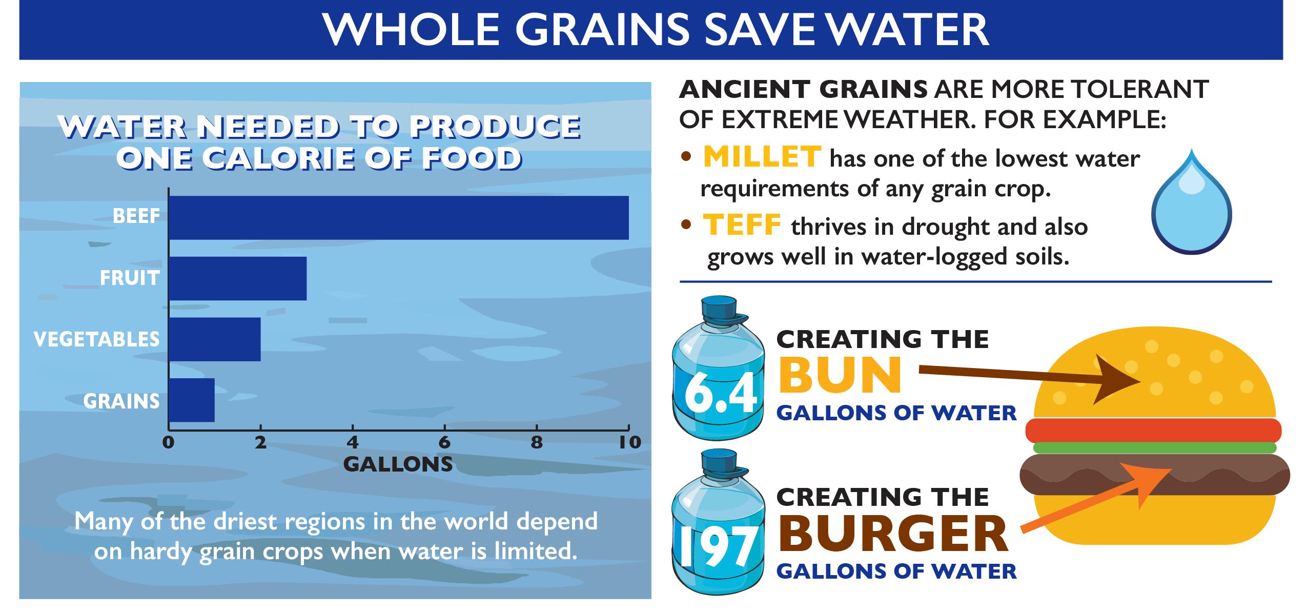 WG_SustainableFood_infographic-2.jpg