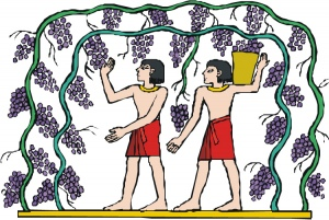 Ancient-grapes2.jpg