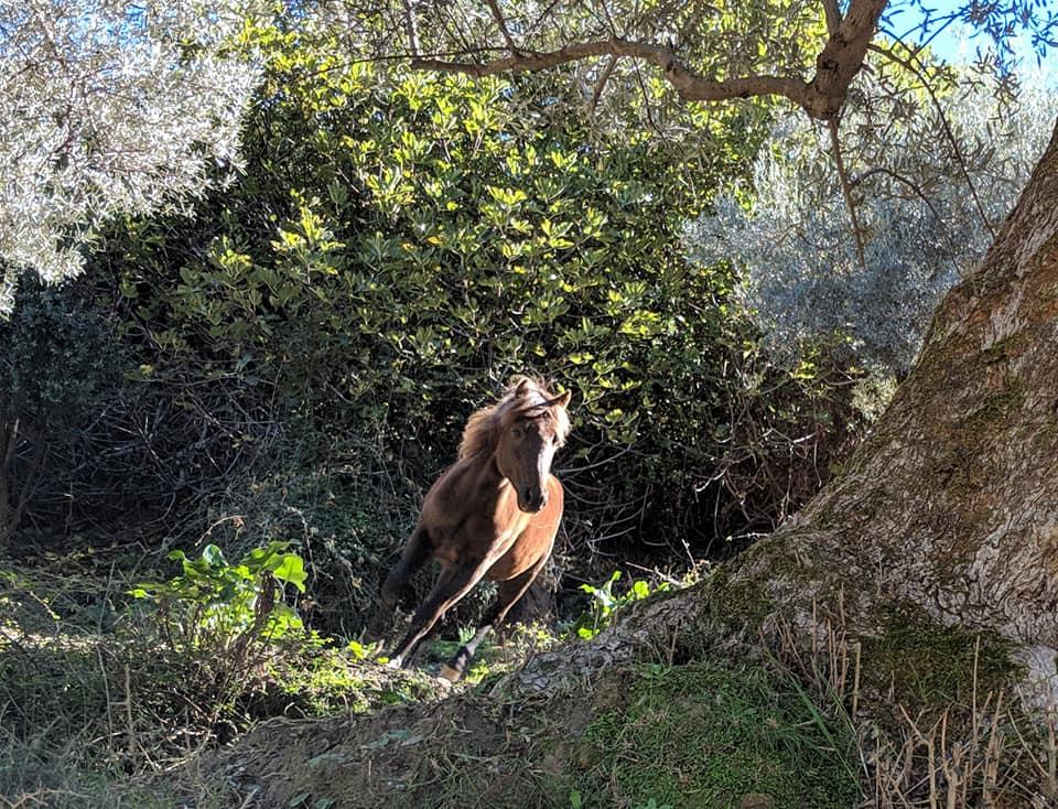 horse running crete.jpg