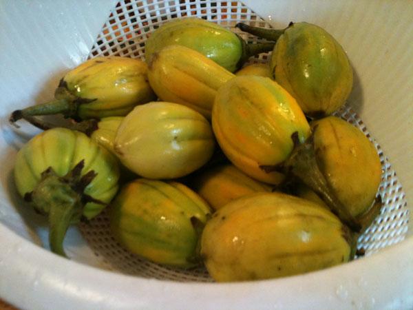 Jilo-eggplant.jpg