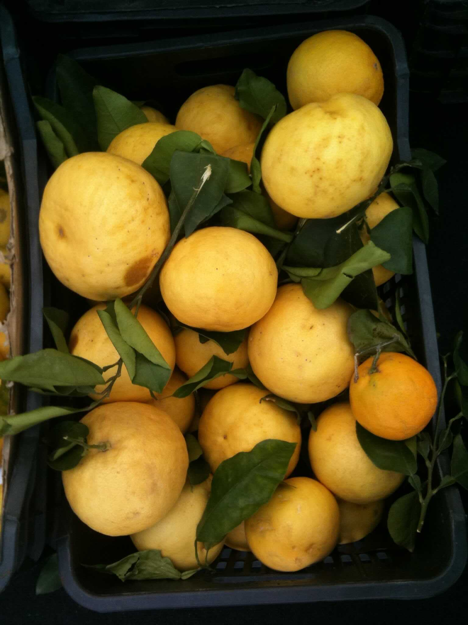 fresh yellow lemons From farmers market