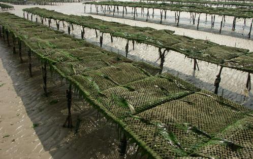 Oysterscalv1.jpg