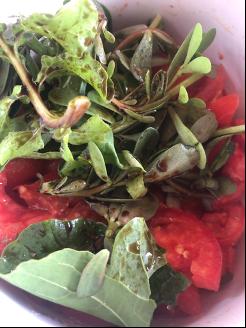 pantescan salad.png